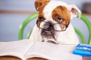 pet custody in divorce