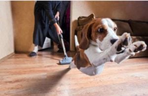 pet custody in divorce in oregon