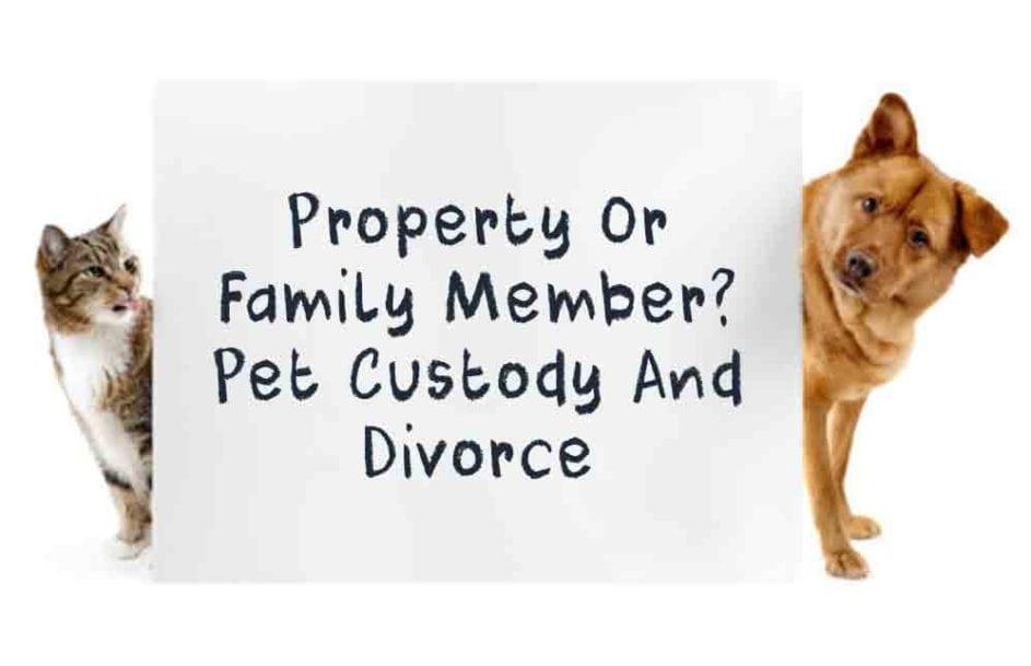 Pet Custody Divorce Goldberg Jones Divorce For Men
