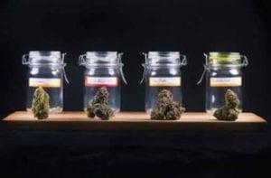 Marijuana & Child Custody | Goldberg Jones | Divorce For Men